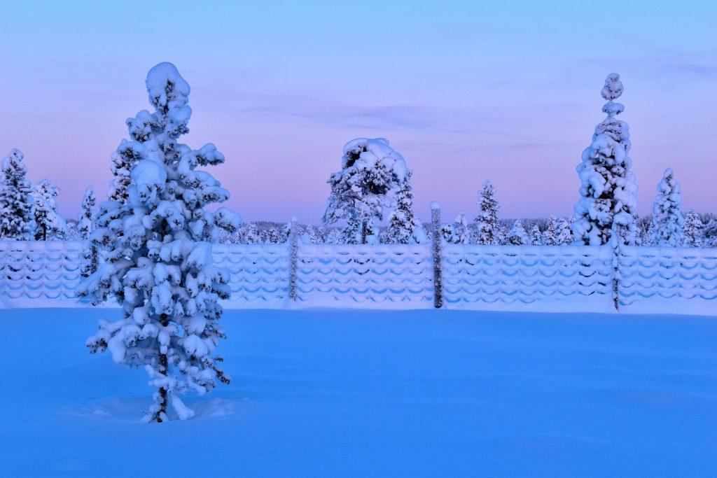 Reingjerde i vinterdrakt